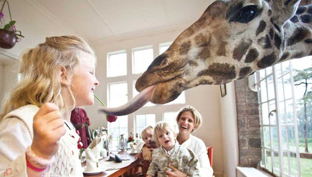 Giraffe Manor. Kenia